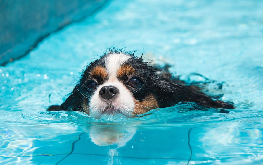 The Benefits of Swimming for Dogs